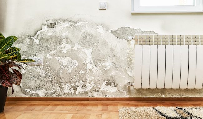 Tips To Prevent And Combat Mold Growing In Your Home