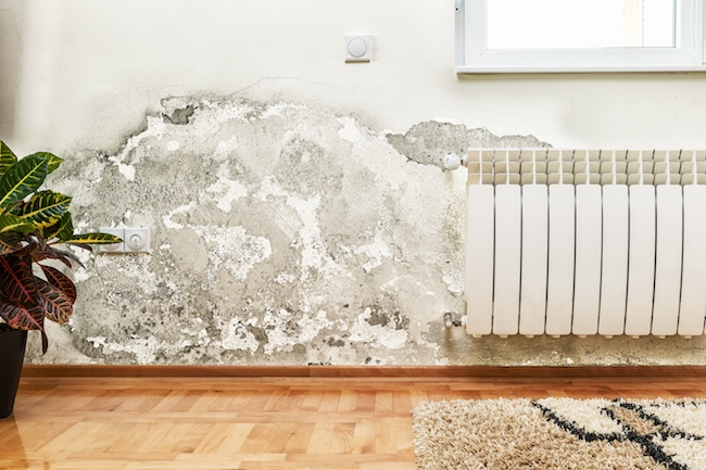 Tips to Prevent and Combat Mold Growing In Your Home - Quicken Loans Zing Blog
