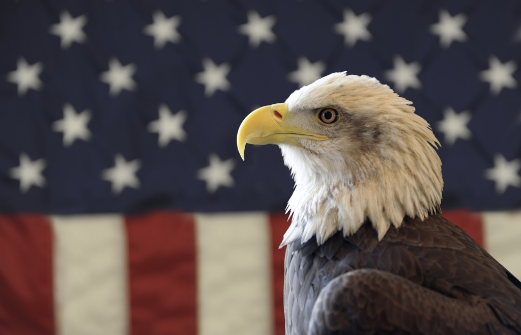 BaldEagle AmericanFlag 1024x658 Dont Know How To Vote? Here Are Five Great Resources