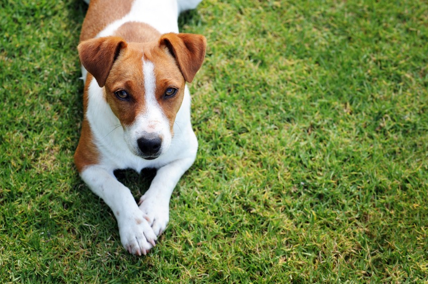 Removing Pet Odors From Your Home - Quicken Loans Zing Blog