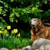Tips for Picking Pet-Safe Plants For Your Home - Quicken Loans Zing Blog