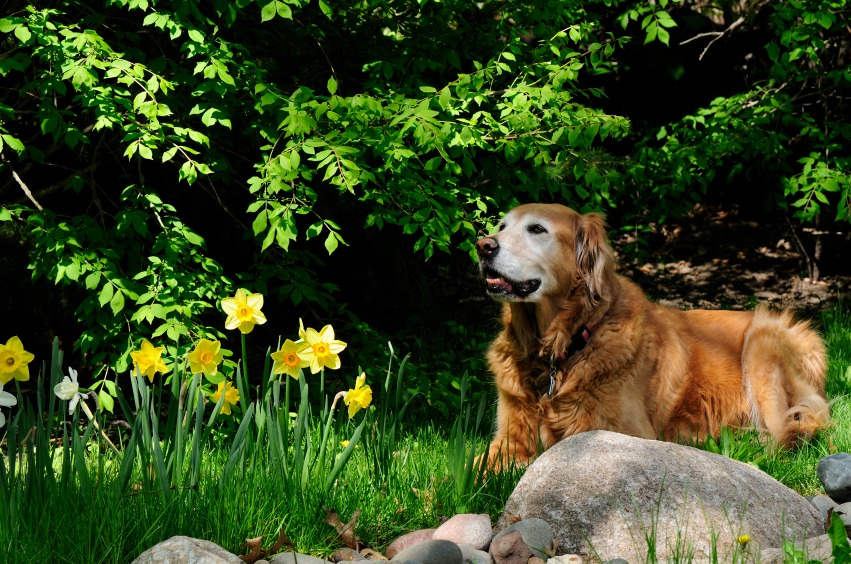 Create a Pet-Friendly Garden - Quicken Loans Zing Blog