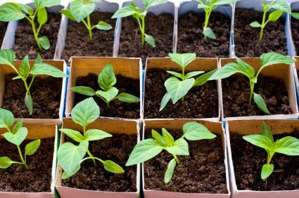 Start Your Own Window Garden - Quicken Loans Zing Blog