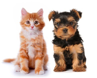 iStock puppy kitten pets Can You Afford a Pet?