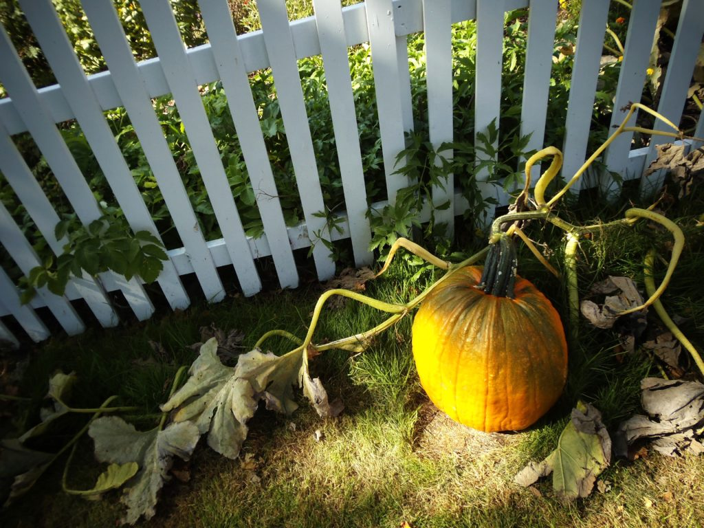 Substituting Pumpkins for Apples this Fall - Quicken Loans Zing Blog