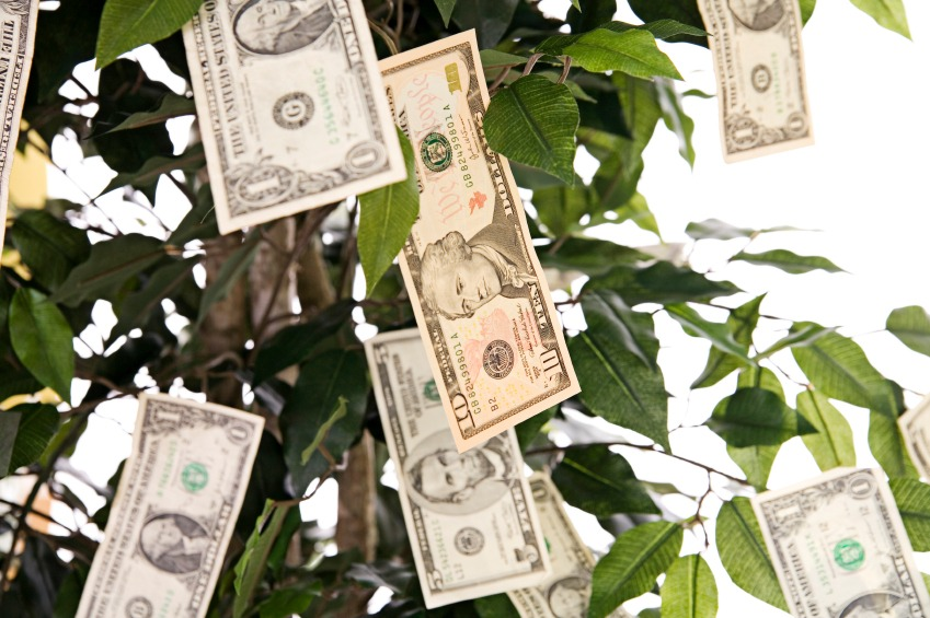iStock Money Tree Small How to Plant (Budget) and Grow Your Own Money Tree