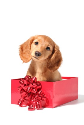 Gifting a Pet This Christmas? Here Are Some Things to Consider First - Quicken Loans Zing Blog