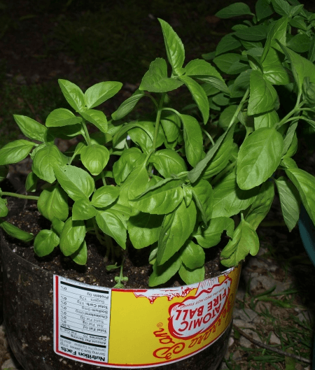 6 easy to grow mosquito repellent plants for your garden zing blog by quicken loans - Mosquito repellent plants ...