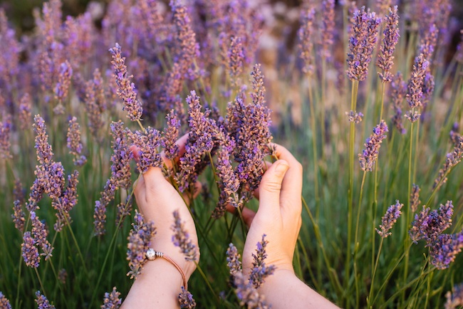 5 DIY Natural Insect Repellents to Protect Your Home | ZING