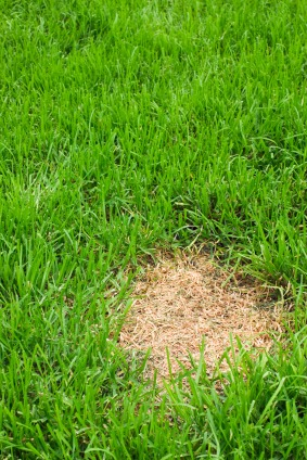 Lawn Diseases - Quicken Loans Zing Blog