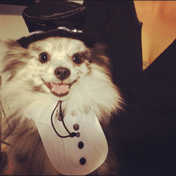 5 Halloween Safety Tips for Pets - Quicken Loans Zing Blog