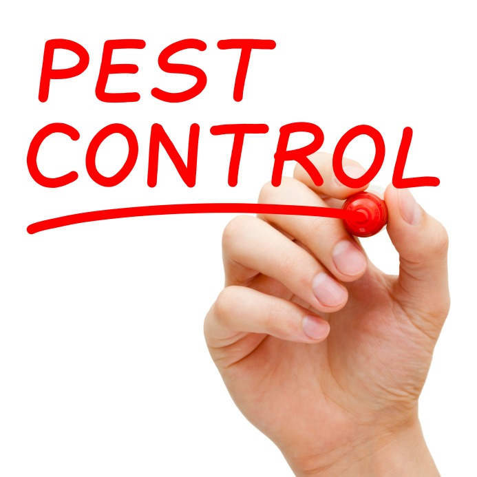 5 Do-It-Yourself Pest Control Tips for Homeowners - Quicken Loans Zing Blog