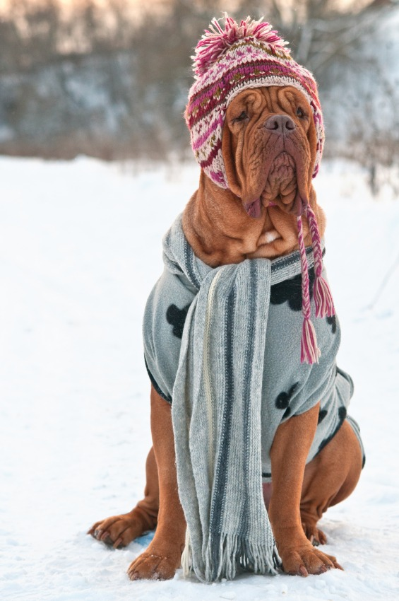 How to Keep Your Pets Safe This Winter - Quicken Loans Zing Blog