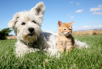 Pet Safety Tips - Quicken Loans Zing Blog