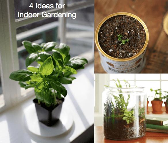 Four Ideas for Indoor Gardening - Quicken Loans Zing Blog