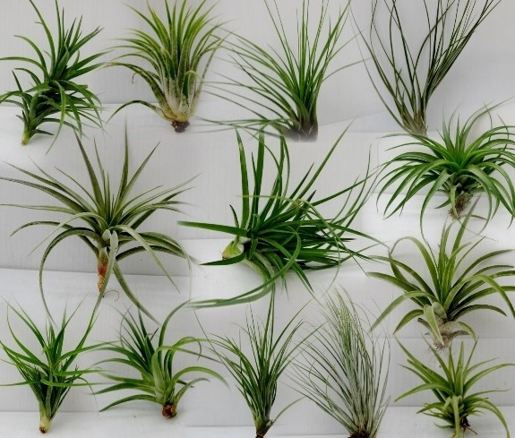 How to Make an Air Plant Terrarium - Quicken Loans Zing Blog