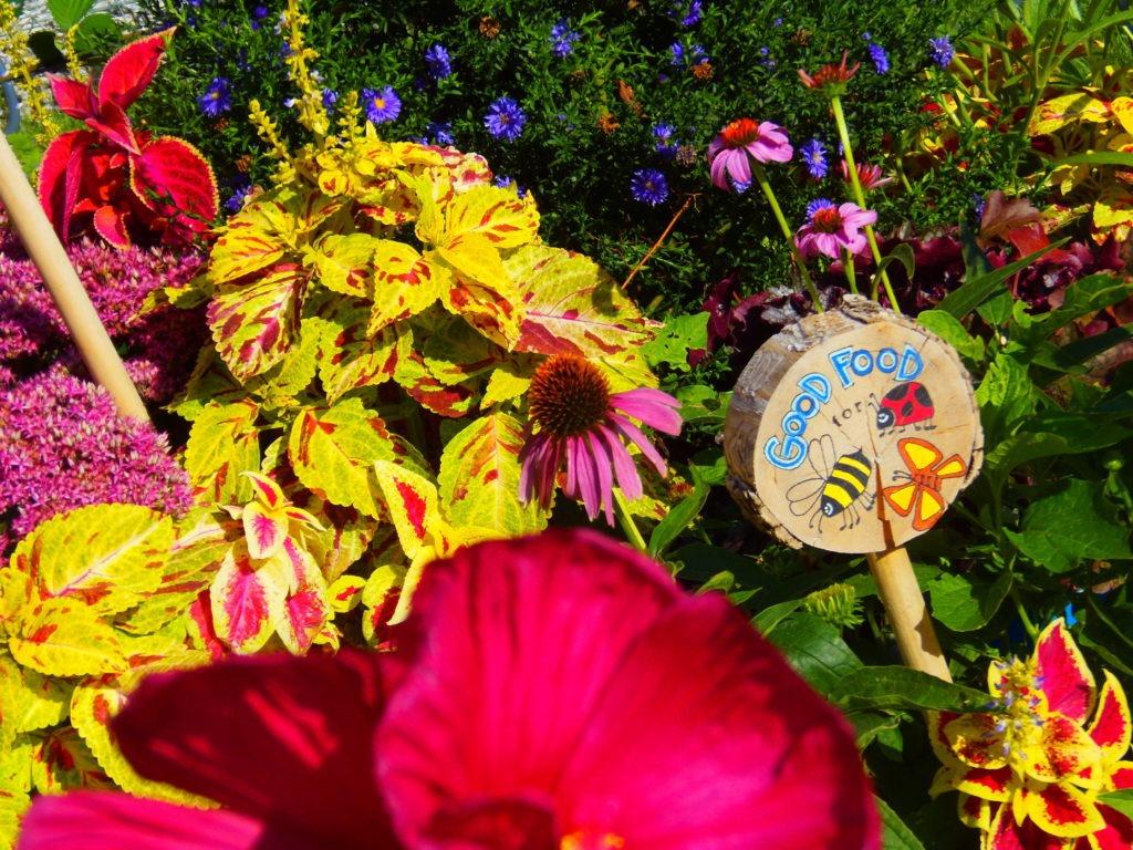 AmaZING Garden Giveaway - Quicken Loans Zing Blog