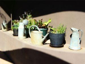 Southwestern Foliage - Quicken Loans Zing Blog