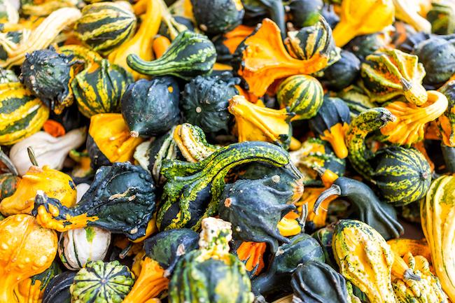 Closeup of small yellow, orange, green, multicolored, multicolor decorative pumpkin squash pattern display in farm market store