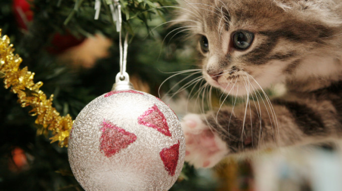 Pet Safety Tips For The Holiday Season