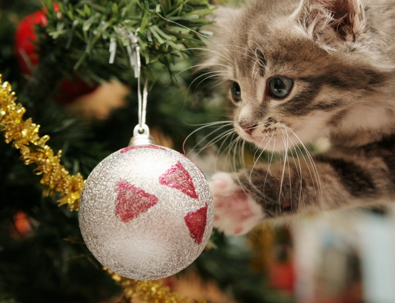 Pet Safety Tips for the Holiday Season - Quicken Loans Zing Blog