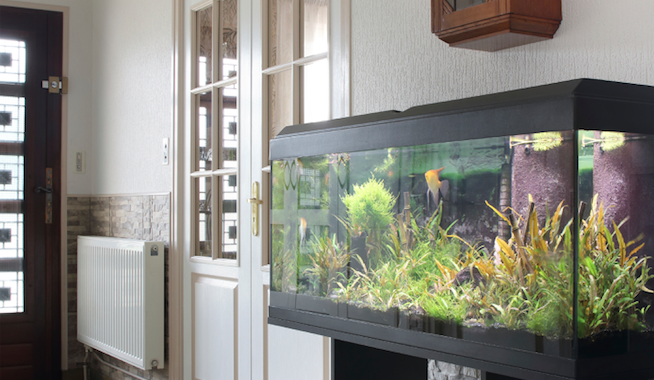 Setting Up And Caring For An Aquarium At Home
