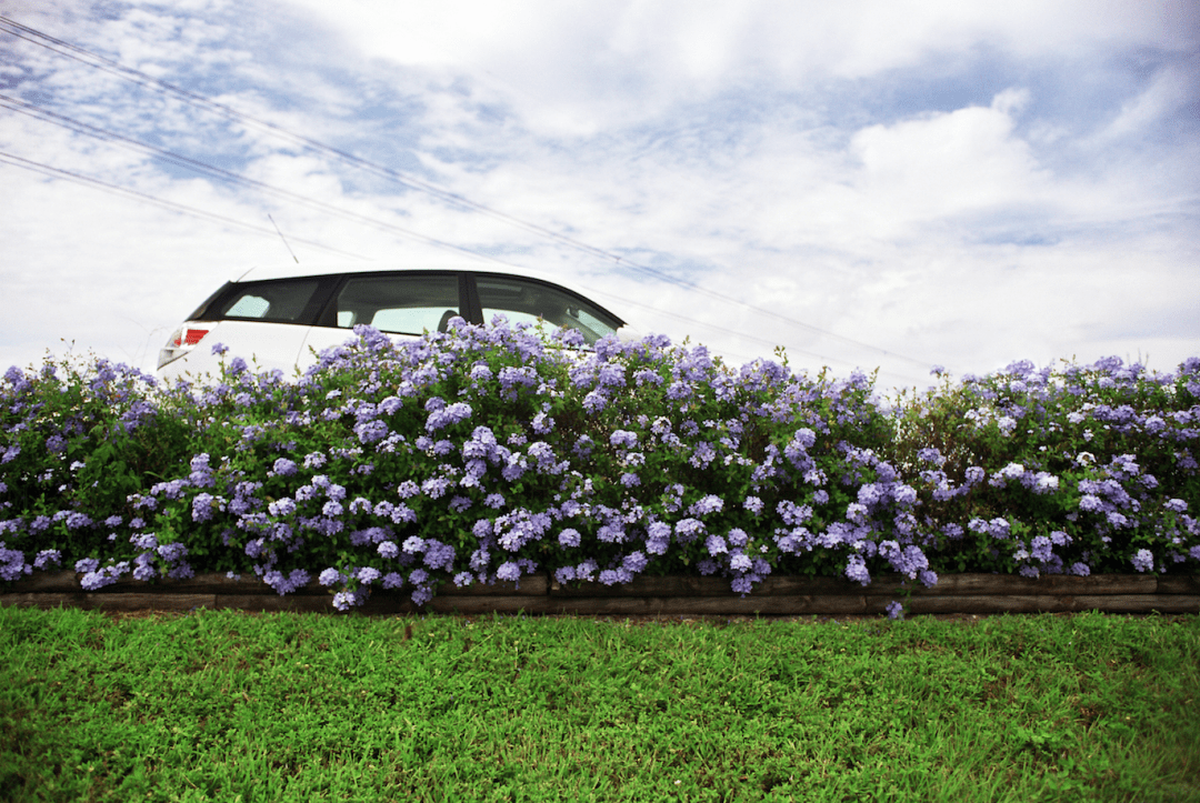 Hybrid car driving pass flowers