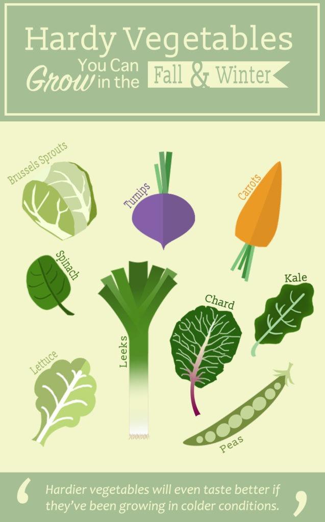 veggies-zing