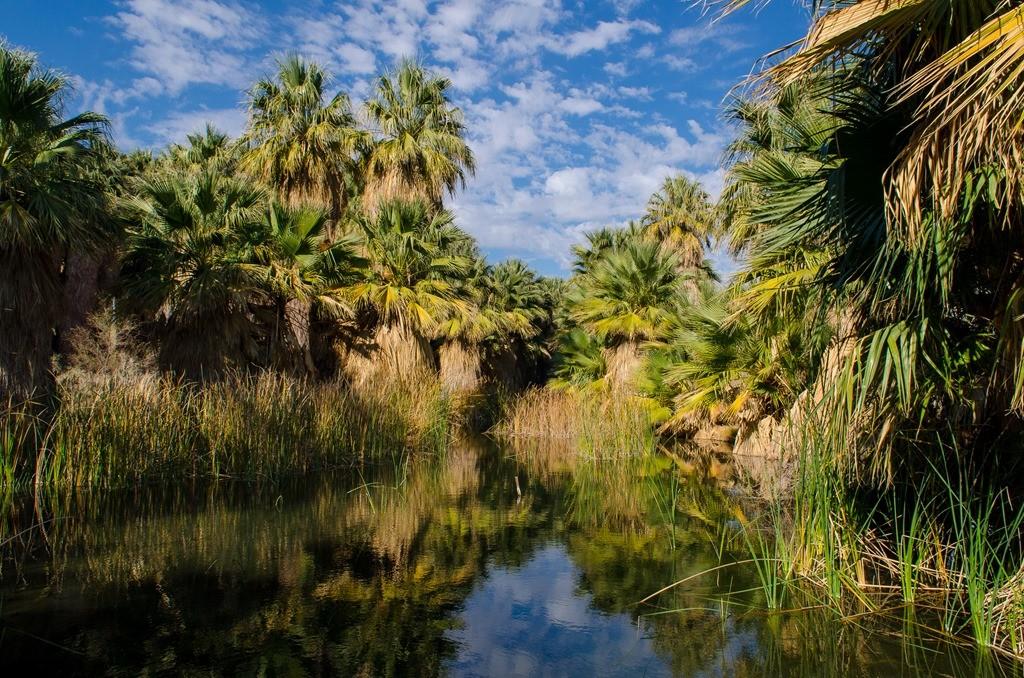 Thousand Palms, CA