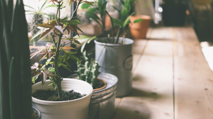 10 Common Houseplants And How To Take Care Of Them