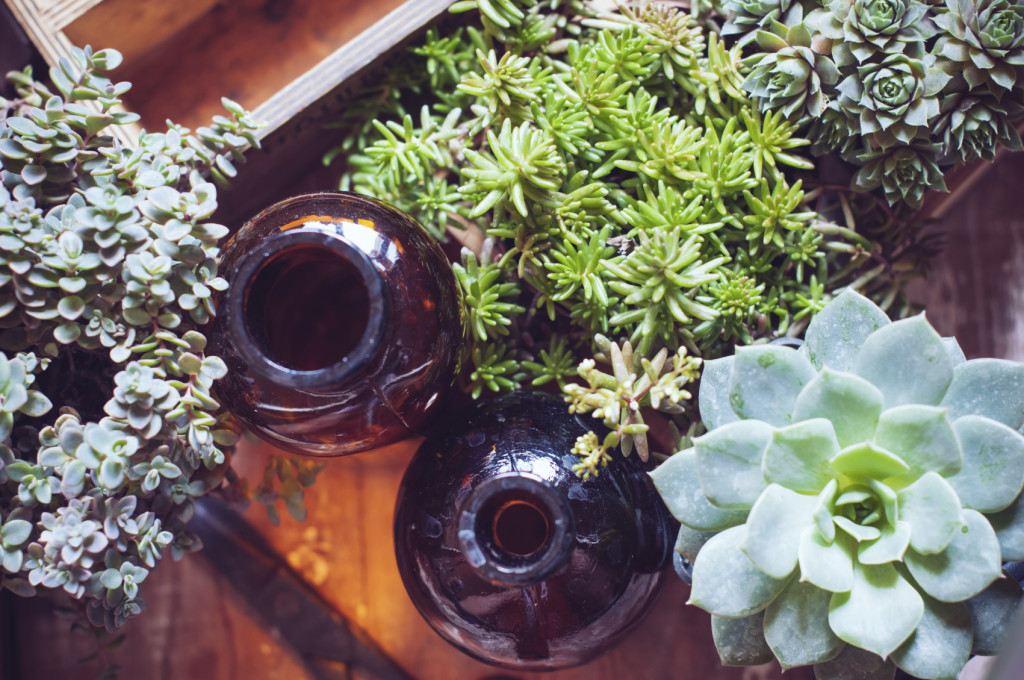 House plants, green succulents, old wooden box and brown vintage glass bottles on a wooden board, home gardening and decor rustic style.