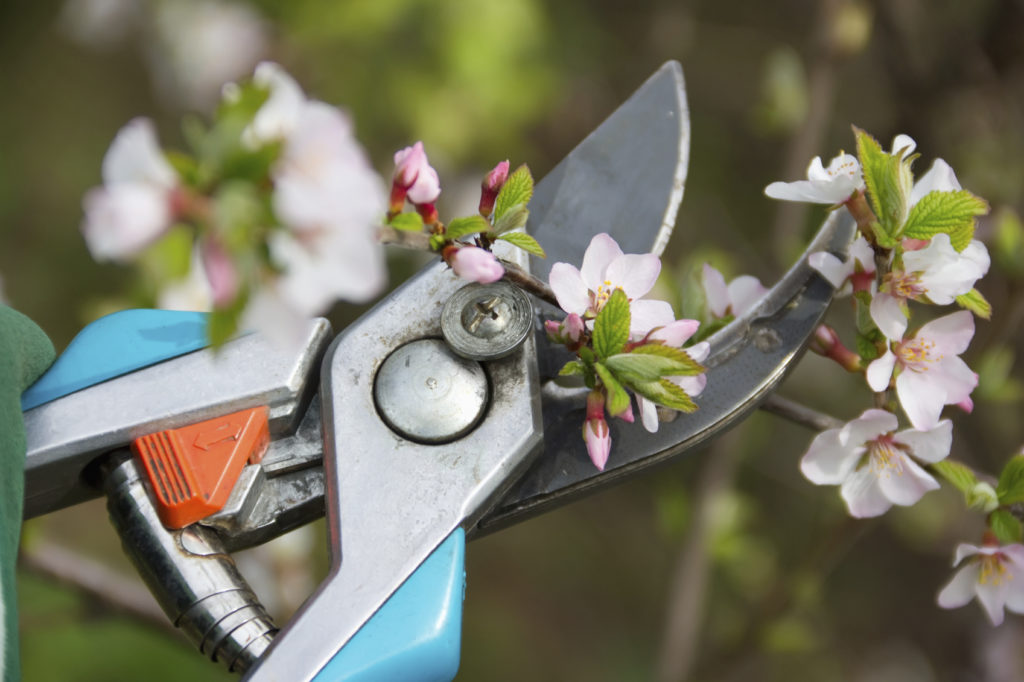 6 Gardening Tools the Pros Love - Quicken Loans Zing Blog