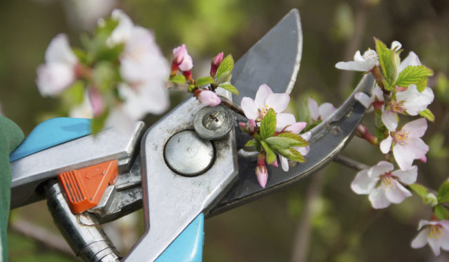 5 Gardening Tools The Pros Love