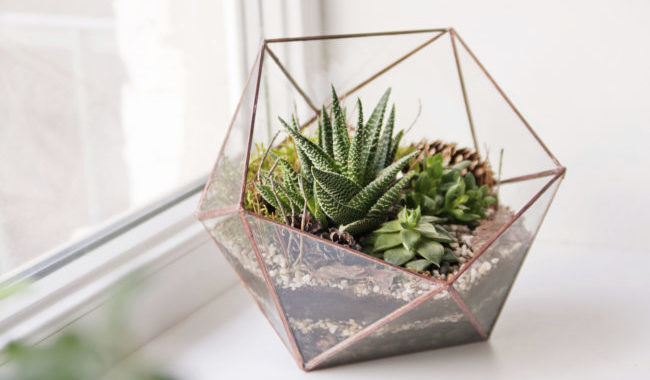 3 Things To Know About Caring For Succulents