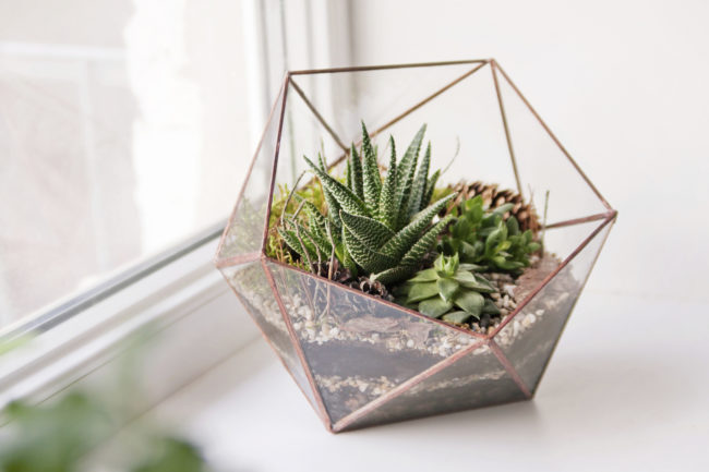 3 things to know about caring for succulents zing blog Plantas para decoracion minimalista