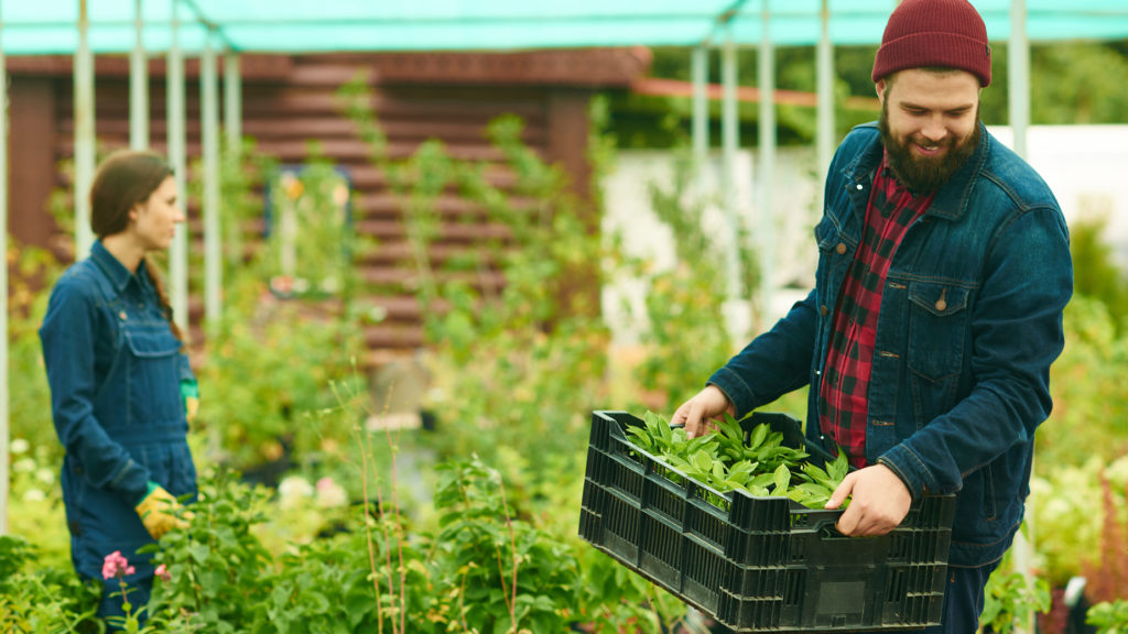 Smiling gardener carrying plants in container to transplant it