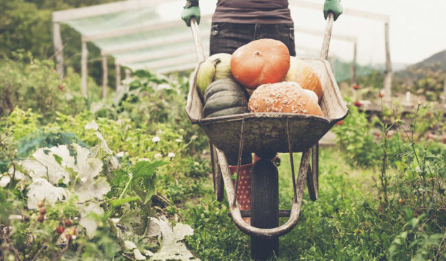 Fall Gardening: How To Prepare In Your Region