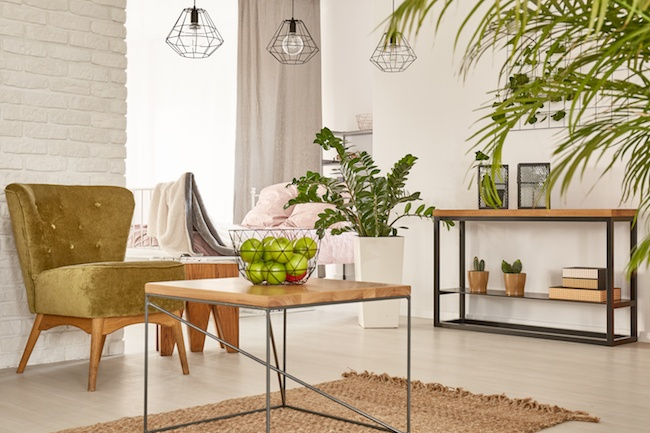 Which Houseplant Is Right for You? - Quicken Loans Zing Blog