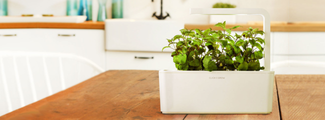 Click and Grow herb box