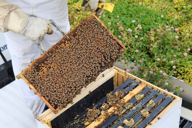 Gripping a beehive frame