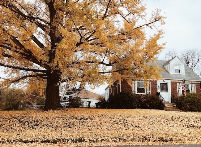 House Covered in Fall Leaves