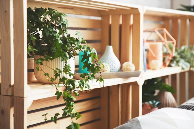 English ivy on a bookshelf