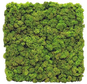 Moss wall panel